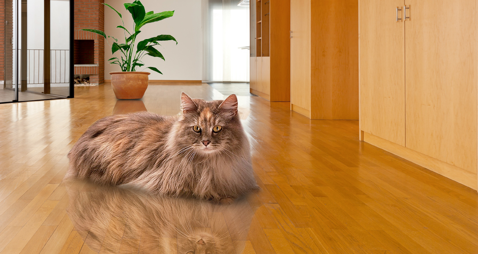 cat_on_wood_floor_at_Foster_Flooring