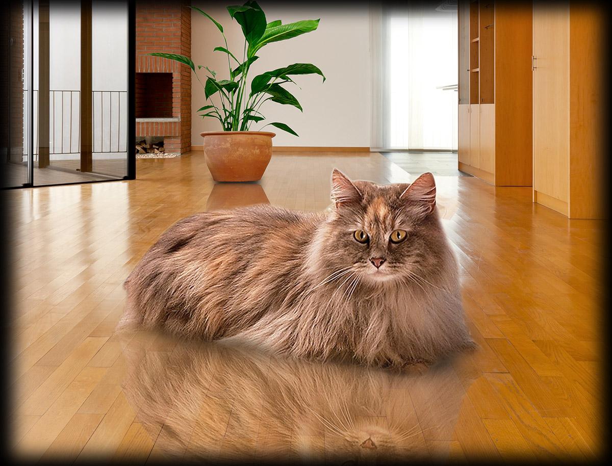 cat_on_wood_floor_at_Foster_Flooring